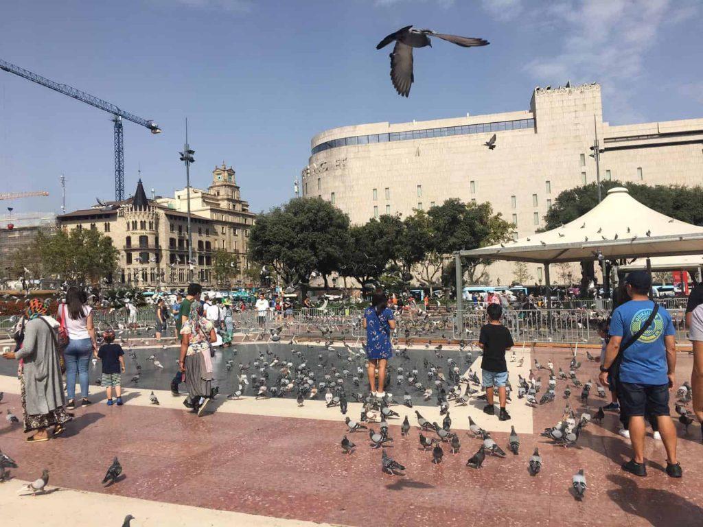 Pigeons in the Placa de Catalunya